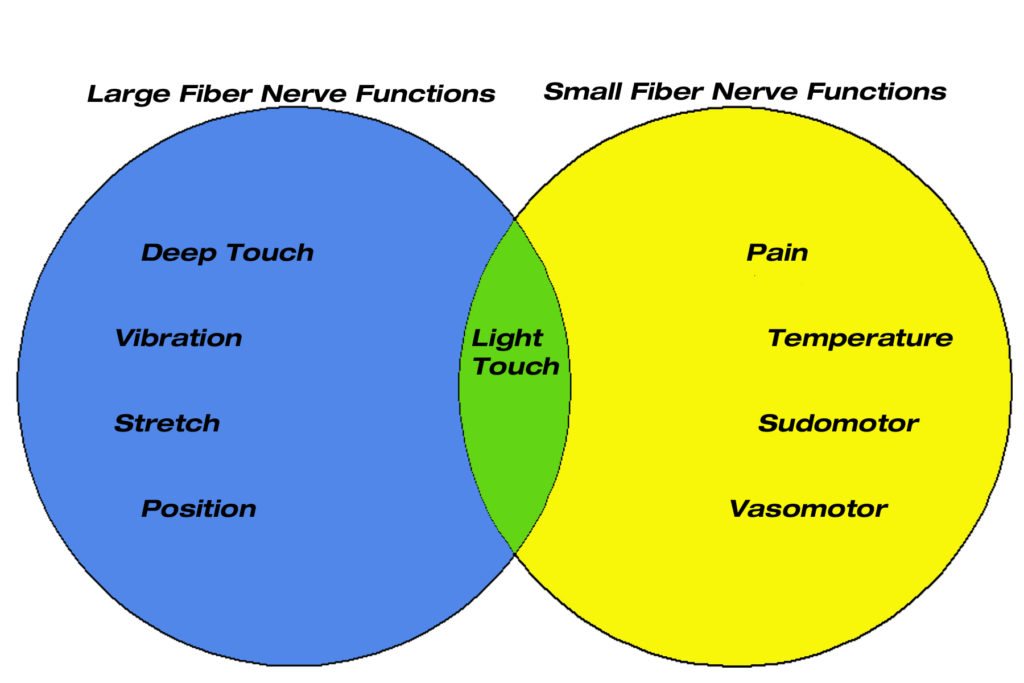 nerve-function-graphic2